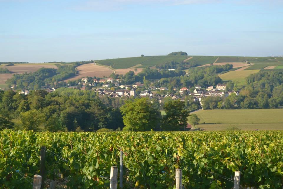 vins de bourgogne chablis Ellevin