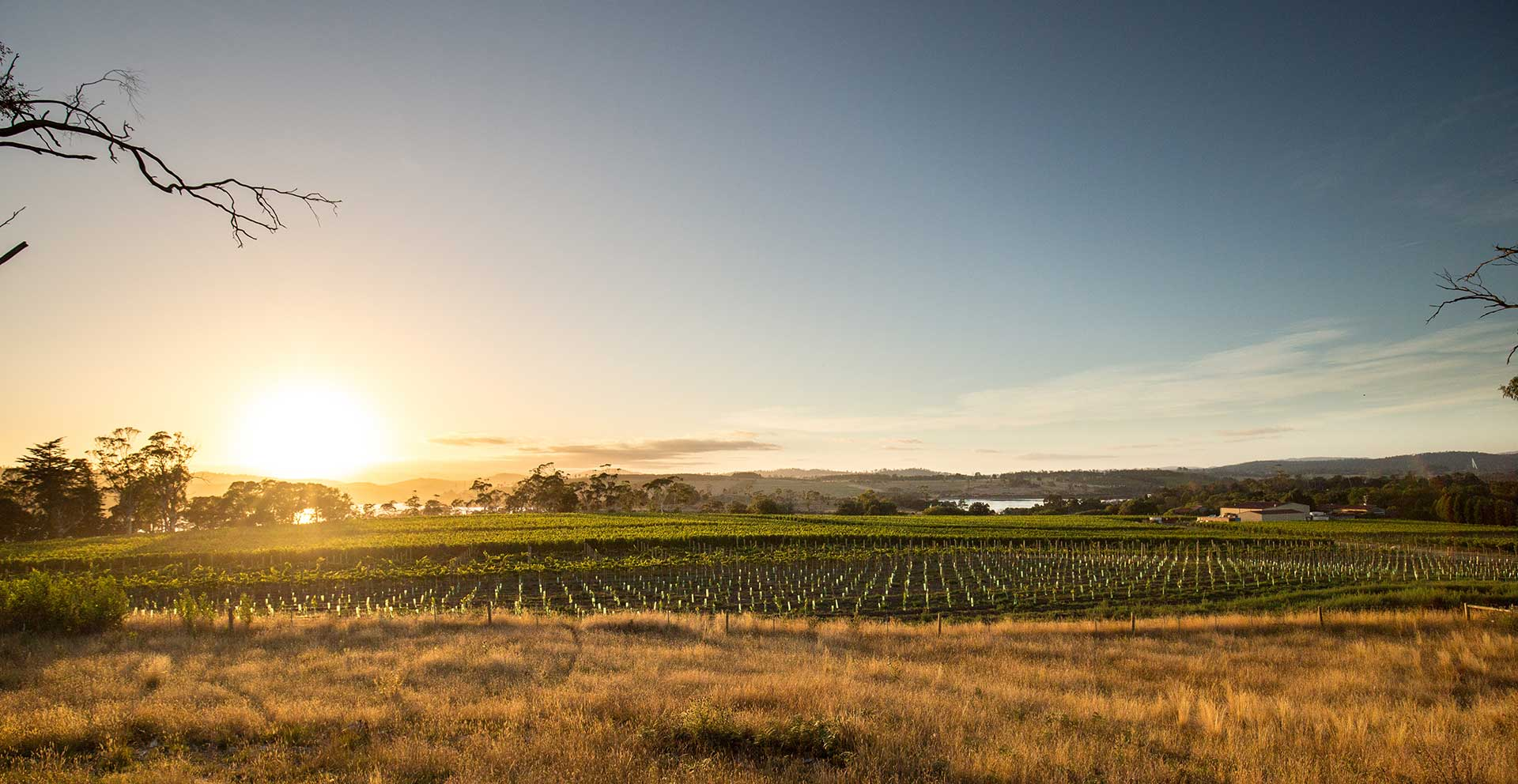 Holm Oak vignoble vins Tasmanie