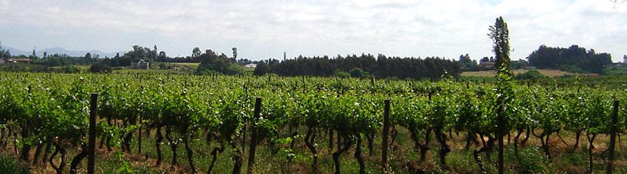 leyendas de familia vins du chili