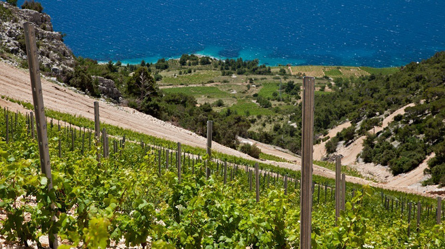 stina vino vins croatie