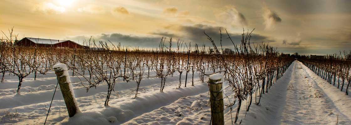 ice wine canada
