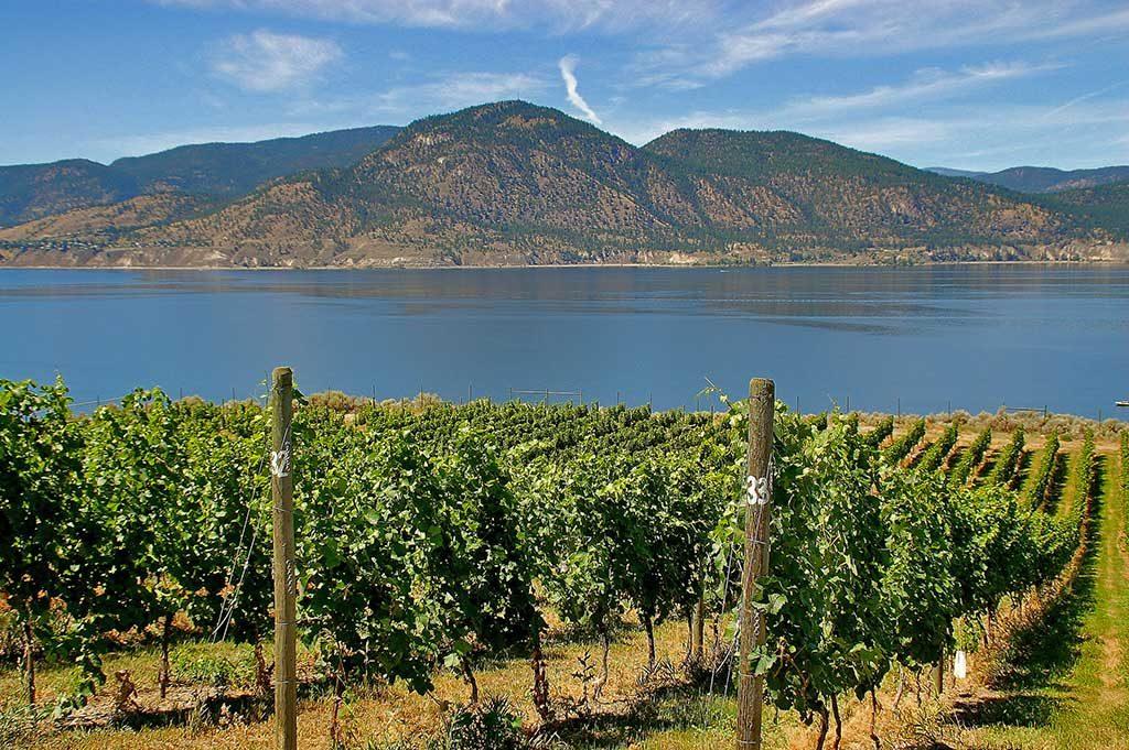 vins canada