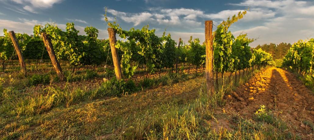 selection vins France Estate Selection