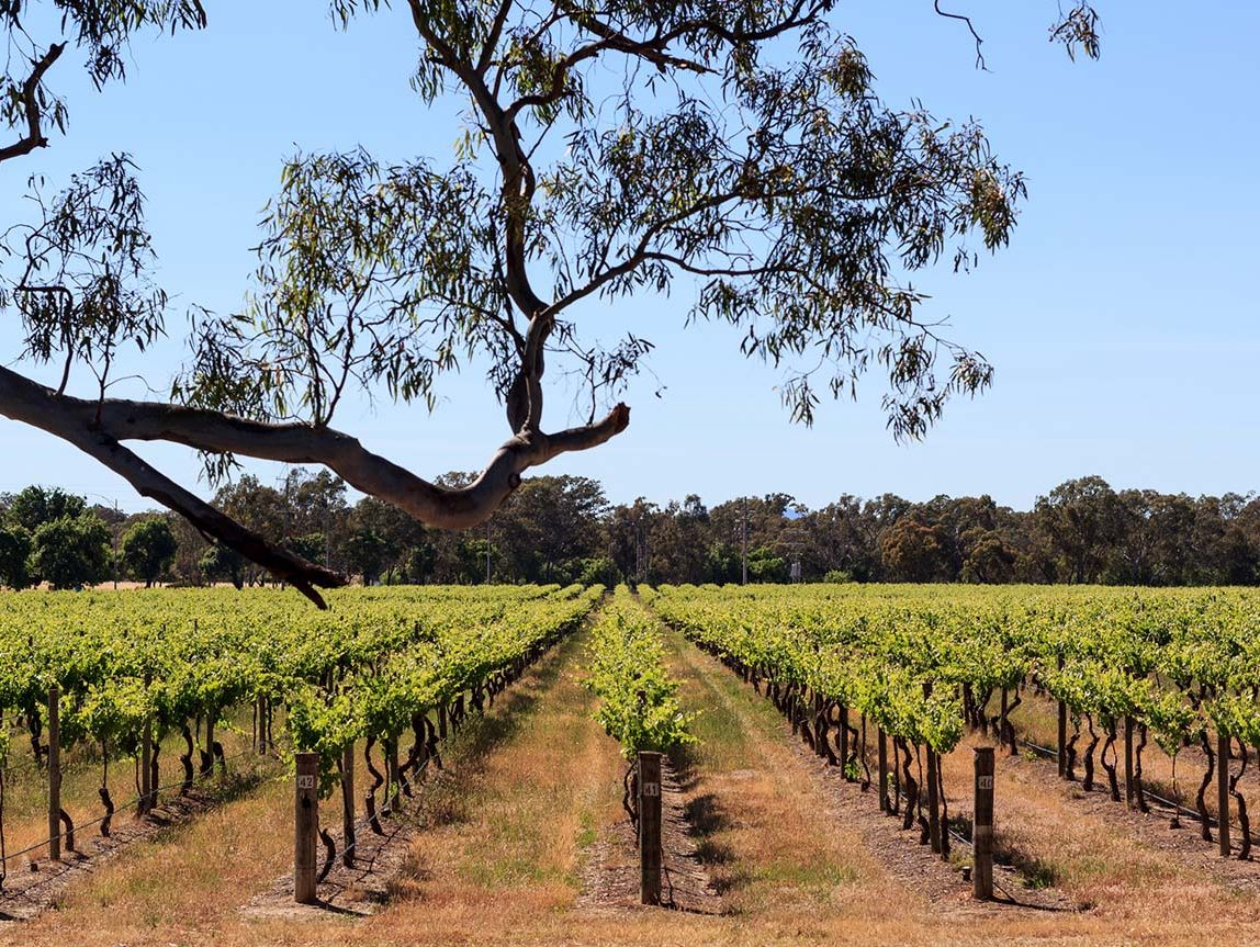 vins australie